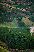 Venda Nova do Imigrante_ES, Brasil...Plantacao de cafe em Venda Nova do Imigrante...Coffee plantation in Venda Nova do Imigrante...Foto: LEO DRUMOND / NITRO