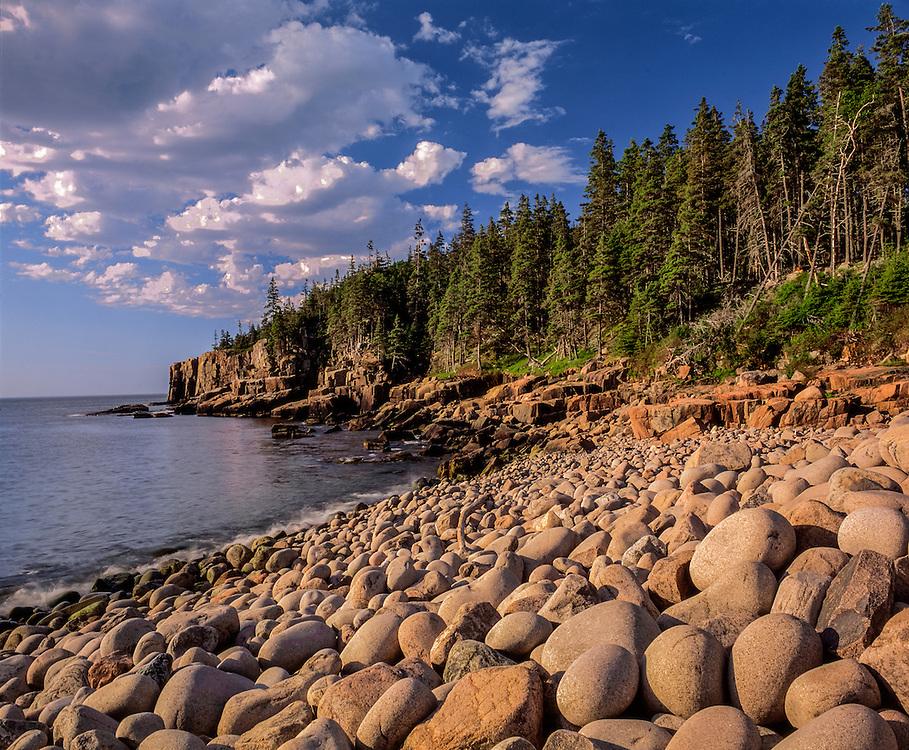 Rugged Atlantic coastline, spruce trees & rocks rounded by waves, Acadia National Park, ME