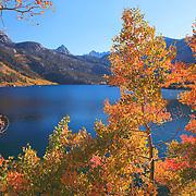 Bishop Lakes, CA - Fall Color