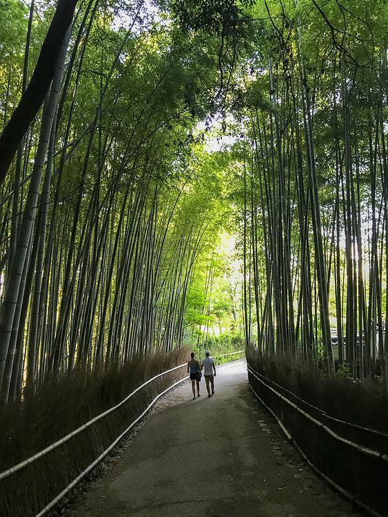 Path in the bamboo forest, Arashiyama, Kyoto, Japan