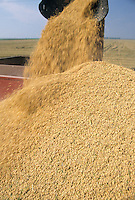new harvested rice being poured from a combine into a truck for storage and sale in Arkansas