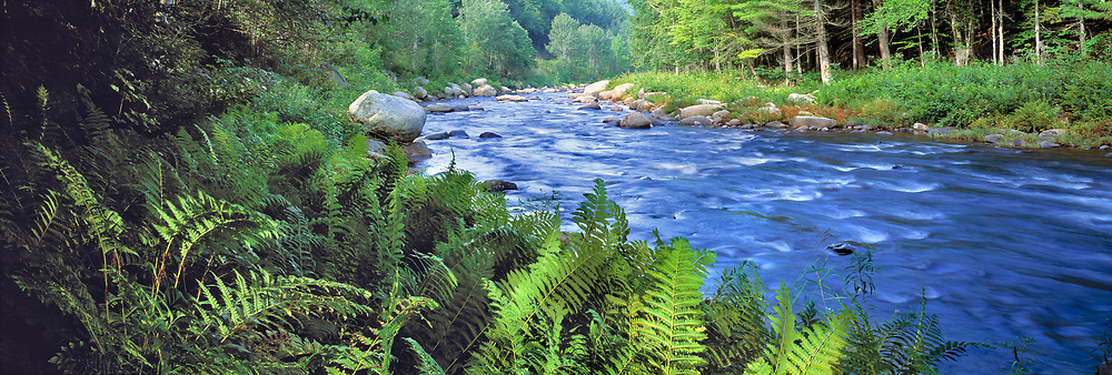 Ferns adorn the banks of the Sacandaga River in the Adirondack Mountains, New York.