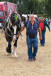 A Shire Horse at the Essex Country Show, Barleylands, Essex.