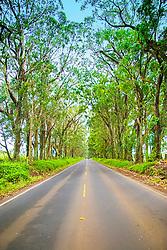 Tree Tunnel, Maluhia Road, Koloa, Kauai, Hawaii, USA