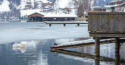 THEMENBILD - ein Blässhuhn (Fulica atra) sitzt am Steg, aufgenommen am 10. März 2018, Zell am See, Österreich // a coot (Fulica atra) is sitting on the jetty on 2018/03/10, Zell am See, Austria. EXPA Pictures © 2018, PhotoCredit: EXPA/ Stefanie Oberhauser