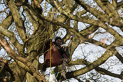 Harefield, UK. 7 February, 2020. Three environmental activists from Extinction Rebellion occupy a veteran oak tree close to the Harvil Road wildlife protection camp in order to try to protect it from felling. HS2 are expected to try to fell large numbers of mature trees in the immediate vicinity over the weekend even though the high-speed rail link is still awaiting Boris Johnson's approval.
