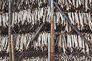 Stockfish hanging to dry in Å, Lofoten Islands, Norway.