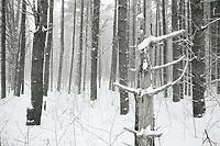 https://Duncan.co/amongst-the-trees-5