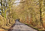 Country road winding into distance between avenue of trees, Yatesbury, Wiltshire, England, UK
