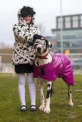 © Licensed to London News Pictures. 08/03/2018. Birmingham UK. 9 Year old Claudia Kelleway with her Harlequin Great Dane arriving at the NEC in Birmingham this morning for the Crufts 2018 dog show. Photo credit: Andrew McCaren/LNP