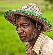 A rice farmer, hard at work in the tropical heat.<br /> (Photo by Matt Considine - Images of Asia Collection)