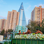In Pyongyang, near the Ryugyong, which should have been the tallest building in Asia (but is still not completed 30 years after), a truck loaded of cabbage is guarder by soldiers. The cabbage will be distributed to the population for winter.