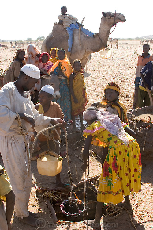 To water their animals, Amna Mustapha (wearing yellow dress) and a cousin must first dip plastic containers into a six-foot well. They then pour the water into a low earthen-walled pool from which the animals drink (the millet stalks at the edge of the trough keep the cascading water from breaking down the wall). Families take turns using the pools, which must be rebuilt often and will ultimately wash away during the rainy season (Supporting image from the project Hungry Planet: What the World Eats.)