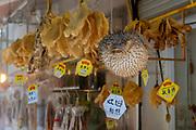 Spot-fin porcupinfish (Diodon hystrix) and other dried fish for sale at Tai O Market Street, Tai O Fishing Village, Lantau Island, Hong Kong, China.