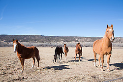 horses on a ranch in New Mexico