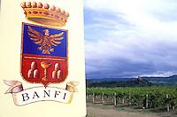 Italie - Toscane - Province de Sienne - Region de Montalcino - Vin Brunello - Vignobles Banfi - Vignes