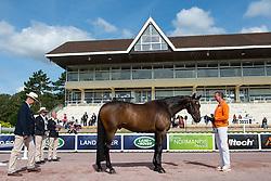 Frank Hosmar, (NED), Alphaville - Horse Inspection Para Dressage - Alltech FEI World Equestrian Games™ 2014 - Normandy, France.<br /> © Hippo Foto Team - Jon Stroud<br /> 25/06/14