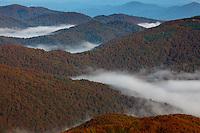 Carpathian beech forest in clouds, view from Polonina Carynska, Bieszczady National Park, Poland