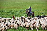 Mongolie, Province de Arkhangai, campement nomade, troupeau de mouton sous la pluie // Mongolia, Arkhangai province, nomad camp, sheep herd under the rain