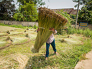 25 APRIL 2014 -  MAE CHAN, CHIANG RAI, THAILAND:  A worker spreads out papyrus reeds to dry before they are woven in matts in Mae Chan, Chiang Rai province, Thailand. Families in Chiang Rai province still make woven reed matts by hand. The matts are used around the house as an impromptu table, and farmers as something to spread out on the ground during lunch, like a picnic blanket. They cost anywhere from 15Baht (.50¢ US) to 150Baht ($5.00 US) depending on size.    PHOTO BY JACK KURTZ
