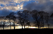 Tree Silhouettes, Peak District