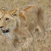 African Safari - East Africa