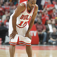 14 March 2012: Chicago Bulls point guard John Lucas (15) rests during the Chicago Bulls 106-102 victory over the Miami Heat at the United Center, Chicago, Illinois, USA.