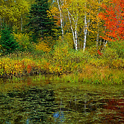 Fall colors in Chalevoix, province of quebec. Canada.