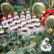 Cacti are decorated as Christmas carolers inside Montreal's Botanical Garden, one of the world's largest indoor botanical gardens featuring a range of different environments from orchids to spices to cacti.