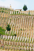 The chapel on top of the hill.   The Hermitage vineyards on the hill behind the city Tain-l'Hermitage, on the steep sloping hill, stone terraced. Sometimes spelled Ermitage.  Domaine M Chapoutier, Tain l'Hermitage, Drome Drôme, France Europe