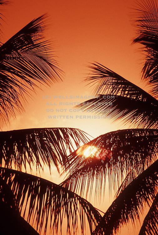 Image of palm trees at sunrise on Bora Bora, Tahiti, French Polynesia by Randy Wells