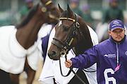 November 1-3, 2018: Breeders' Cup Horse Racing World Championships. Moonlight Romance