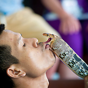 Snake charmer holding a snake in his hand on Phuket snake farm, Thailand
