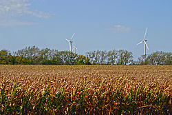 08 May 2006:   Windmills from the White Oak Wind Farm tower over a row of trees that surround a cornfield with crops that are rapidly approaching the upcoming harvest on a day that has bright sunny skies in Central Illinois near Bloomington-Normal in McLean County.<br />