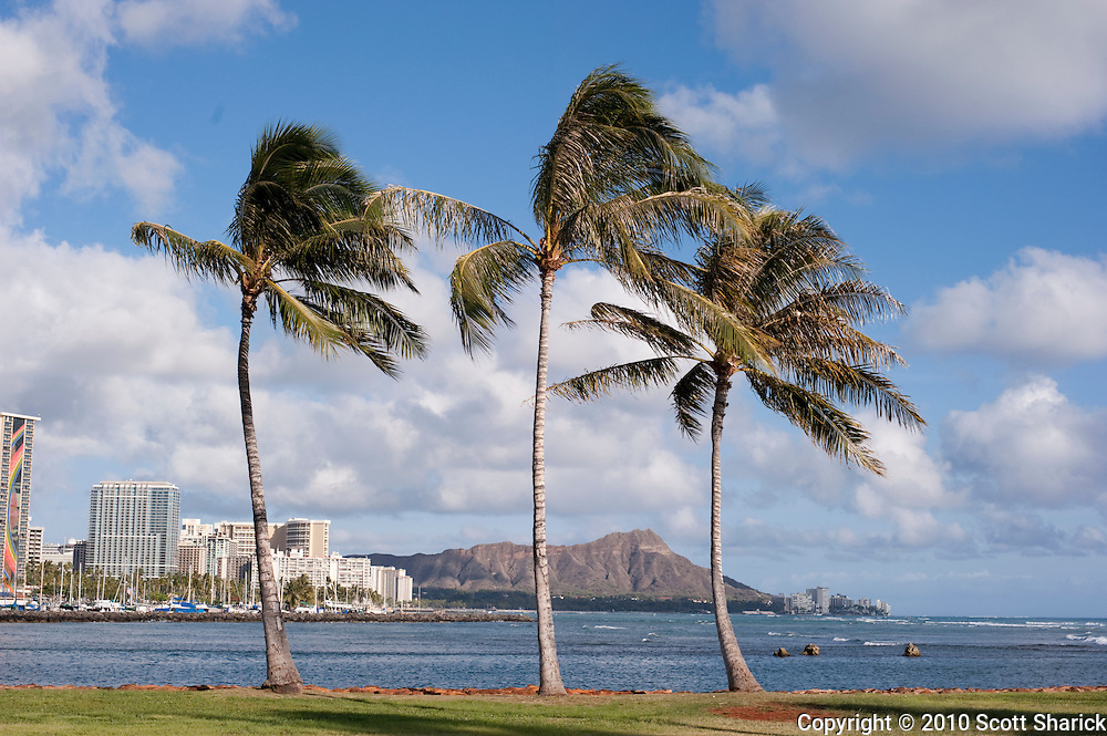 Three palm trees at Ala Moana Beach Park with Diamond Head in the background.