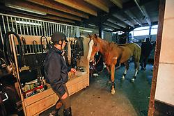 Verlooy Jos (BEL) - Flash Bounce<br /> Reportage Stal Verlooy - Grobbendonk 2009<br /> © Dirk Caremans