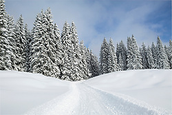 Snowmobile track on snow by trees against sky with trees