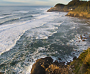 Wild stellar sea lions rest above surf line at Heceta Head, Florence, Oregon, USA. Heceta Head Lighthouse stands across the bay.