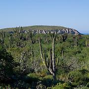 Cactus in desert. Todos Santos highway. BCS, MX.