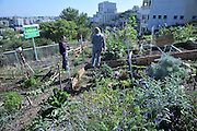 Israel, Haifa, Community Garden, small plots of land are allocated to residence for gardening and farming