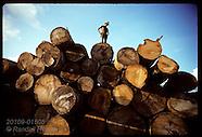16: AMAZON SAWMILL