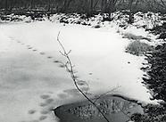 Near Hyla Brook