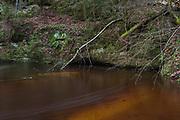 Dark brown waters of river Loja and moss covered sandstone outcrop next to it, Murjāņi, Gauja National Park (Gaujas Nacionālais parks), Latvia Ⓒ Davis Ulands | davisulands.com