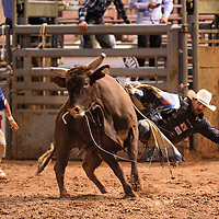 Will Hightower being bucked off a bull at Wild Thing 25th Annual Championship Bull Riding competition at Red Rock Park, July 14.