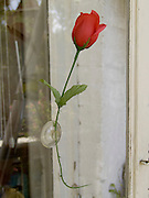 a single plastic rose by itself stuck to the glass of a door