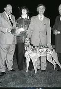 greyhound at shelbourn park