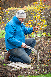 Using a tree bark protector on young trees to protect  against rabbit damage