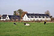 Nederland, Leuth, 6-11-2020 Aan de rand van dit kleine dorp in de ooijpolder bij Nijmegen in Gelderland zijn een aantal nieuwe huizen gebouwd in de sociale huursector . Hierdoor krijgen jonge starters uit het dorpje een kans op een woning . De woningen hebben zonnepanelen op het dak waardoor ze zelf elektriciteit produceren.Foto: ANP/ Hollandse Hoogte/ Flip Franssen