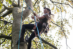 Aylesbury Vale, UK. 5th October, 2020. A tree protector climbs towards a tree house about sixty feet above ground at a wildlife protection camp in ancient woodland at Jones' Hill Wood. The Jones' Hill Wood camp, one of several protest camps set up by anti-HS2 activists along the route of the £106bn HS2 high-speed rail link in order to resist the controversial infrastructure project, is currently being evicted by National Eviction Team bailiffs working on behalf of HS2 Ltd.