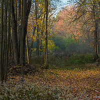 Mist, sunlight and fall colours in Lanark County, Ontario.